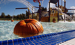 Pool Pumpkin Patch