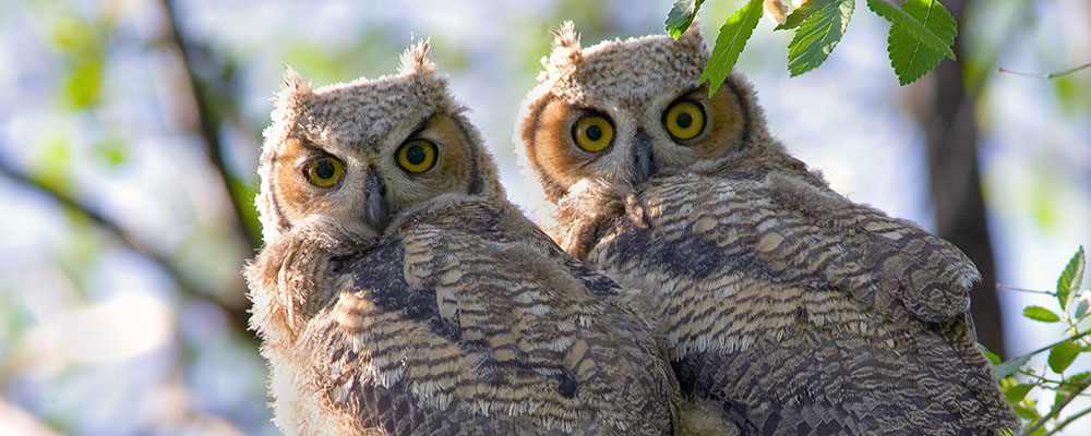 Hoots and Owls Program at LARPD
