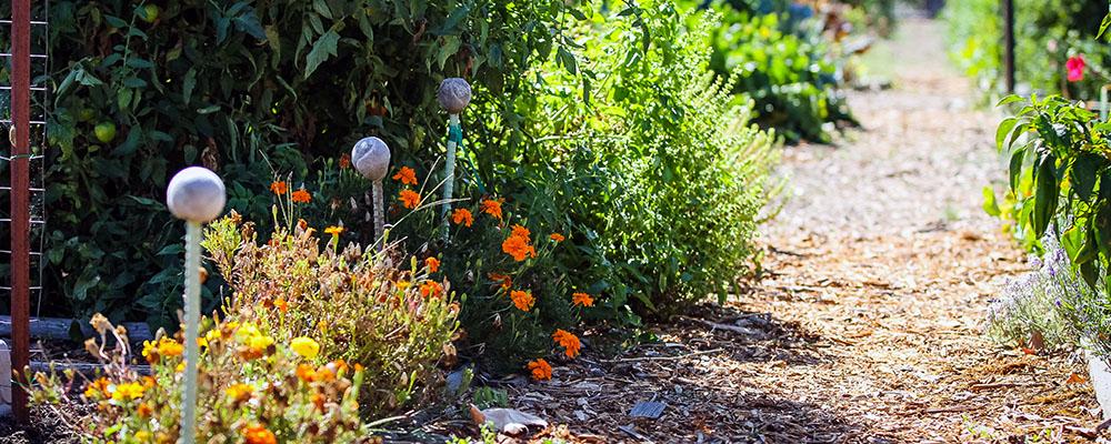 LARPD Community Garden Pathway