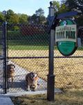 Dogs inside Bark Park